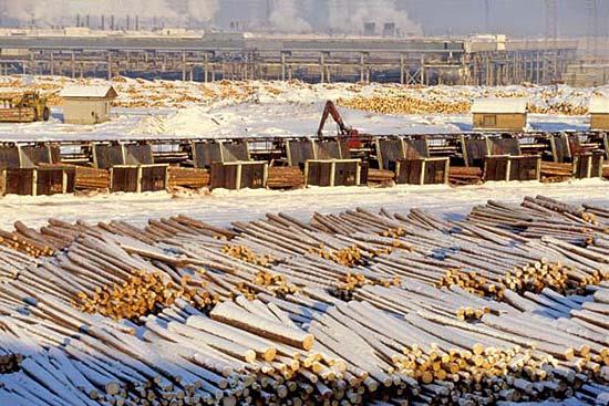 Томский лес будут продавать через товарно-сырьевую биржу